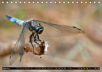 Drachenfliegen und Teufelsnadeln (Tischkalender 2019 DIN A5 quer) - Produktdetailbild 4