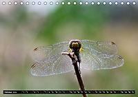 Drachenfliegen und Teufelsnadeln (Tischkalender 2019 DIN A5 quer) - Produktdetailbild 10