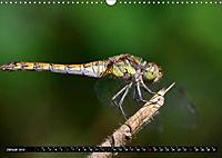 Drachenfliegen und Teufelsnadeln (Wandkalender 2019 DIN A3 quer) - Produktdetailbild 1