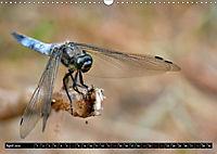 Drachenfliegen und Teufelsnadeln (Wandkalender 2019 DIN A3 quer) - Produktdetailbild 4