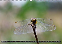 Drachenfliegen und Teufelsnadeln (Wandkalender 2019 DIN A3 quer) - Produktdetailbild 10