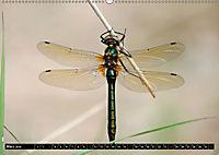 Drachenfliegen und Teufelsnadeln (Wandkalender 2019 DIN A2 quer) - Produktdetailbild 3