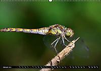 Drachenfliegen und Teufelsnadeln (Wandkalender 2019 DIN A2 quer) - Produktdetailbild 1