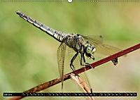 Drachenfliegen und Teufelsnadeln (Wandkalender 2019 DIN A2 quer) - Produktdetailbild 7
