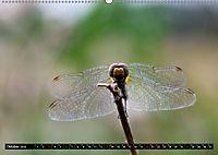 Drachenfliegen und Teufelsnadeln (Wandkalender 2019 DIN A2 quer) - Produktdetailbild 10