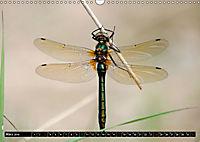 Drachenfliegen und Teufelsnadeln (Wandkalender 2019 DIN A3 quer) - Produktdetailbild 3