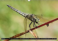 Drachenfliegen und Teufelsnadeln (Wandkalender 2019 DIN A3 quer) - Produktdetailbild 7