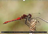 Drachenfliegen und Teufelsnadeln (Wandkalender 2019 DIN A3 quer) - Produktdetailbild 5