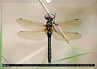 Drachenfliegen und Teufelsnadeln (Wandkalender 2019 DIN A4 quer) - Produktdetailbild 3