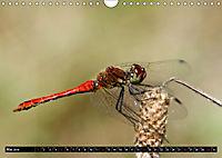 Drachenfliegen und Teufelsnadeln (Wandkalender 2019 DIN A4 quer) - Produktdetailbild 5