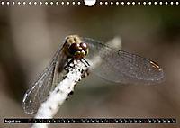 Drachenfliegen und Teufelsnadeln (Wandkalender 2019 DIN A4 quer) - Produktdetailbild 8