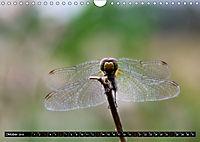 Drachenfliegen und Teufelsnadeln (Wandkalender 2019 DIN A4 quer) - Produktdetailbild 10