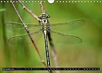 Drachenfliegen und Teufelsnadeln (Wandkalender 2019 DIN A4 quer) - Produktdetailbild 11