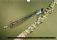 Drachenfliegen und Teufelsnadeln (Wandkalender 2019 DIN A4 quer) - Produktdetailbild 12