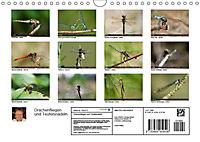 Drachenfliegen und Teufelsnadeln (Wandkalender 2019 DIN A4 quer) - Produktdetailbild 13