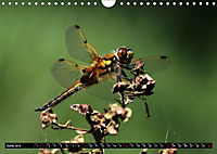 Dragonflies in Hamburg (Wall Calendar 2019 DIN A4 Landscape) - Produktdetailbild 6