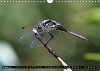 Dragonflies in Hamburg (Wall Calendar 2019 DIN A4 Landscape) - Produktdetailbild 8