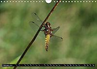 Dragonflies in Hamburg (Wall Calendar 2019 DIN A4 Landscape) - Produktdetailbild 2