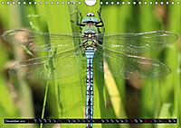 Dragonflies in Hamburg (Wall Calendar 2019 DIN A4 Landscape) - Produktdetailbild 12