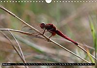 Dragonflies in Hamburg (Wall Calendar 2019 DIN A4 Landscape) - Produktdetailbild 3