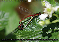 Dragonflies in Hamburg (Wall Calendar 2019 DIN A4 Landscape) - Produktdetailbild 1