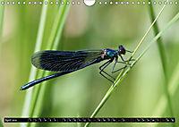 Dragonflies in Hamburg (Wall Calendar 2019 DIN A4 Landscape) - Produktdetailbild 4