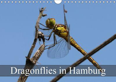 Dragonflies in Hamburg (Wall Calendar 2019 DIN A4 Landscape), Matthias Brix - Studio Brix