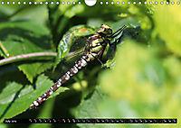 Dragonflies in Hamburg (Wall Calendar 2019 DIN A4 Landscape) - Produktdetailbild 7