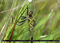Dragonflies in Hamburg (Wall Calendar 2019 DIN A4 Landscape) - Produktdetailbild 5