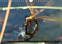 Dragonflies in Hamburg (Wall Calendar 2019 DIN A4 Landscape) - Produktdetailbild 9