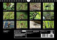 Dragonflies in Hamburg (Wall Calendar 2019 DIN A4 Landscape) - Produktdetailbild 13