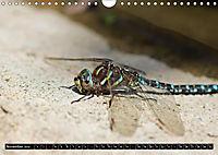 Dragonflies in Hamburg (Wall Calendar 2019 DIN A4 Landscape) - Produktdetailbild 11