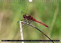 Dragonflies in Hamburg (Wall Calendar 2019 DIN A4 Landscape) - Produktdetailbild 10