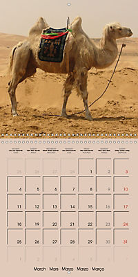 Dromedary and Camel - Giants of the Desert (Wall Calendar 2019 300 × 300 mm Square) - Produktdetailbild 3
