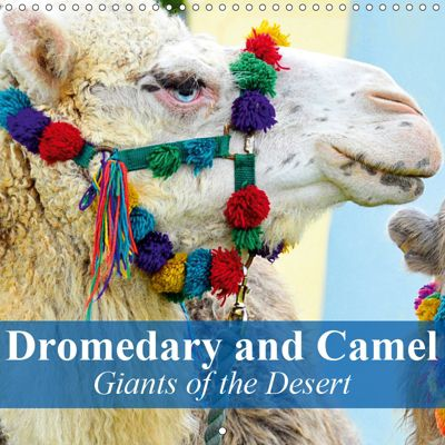 Dromedary and Camel - Giants of the Desert (Wall Calendar 2019 300 × 300 mm Square), Elisabeth Stanzer