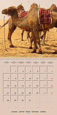 Dromedary and Camel - Giants of the Desert (Wall Calendar 2019 300 × 300 mm Square) - Produktdetailbild 1