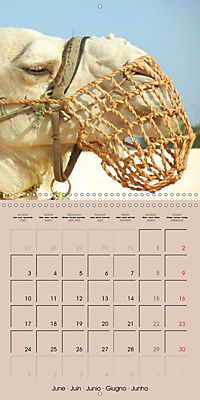 Dromedary and Camel - Giants of the Desert (Wall Calendar 2019 300 × 300 mm Square) - Produktdetailbild 6