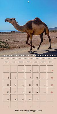 Dromedary and Camel - Giants of the Desert (Wall Calendar 2019 300 × 300 mm Square) - Produktdetailbild 5