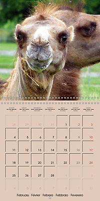 Dromedary and Camel - Giants of the Desert (Wall Calendar 2019 300 × 300 mm Square) - Produktdetailbild 2