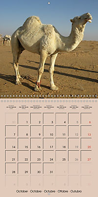 Dromedary and Camel - Giants of the Desert (Wall Calendar 2019 300 × 300 mm Square) - Produktdetailbild 10