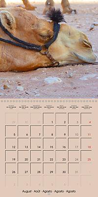 Dromedary and Camel - Giants of the Desert (Wall Calendar 2019 300 × 300 mm Square) - Produktdetailbild 8
