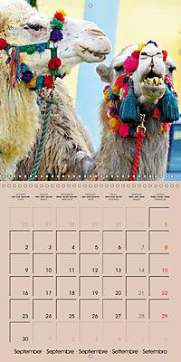 Dromedary and Camel - Giants of the Desert (Wall Calendar 2019 300 × 300 mm Square) - Produktdetailbild 9