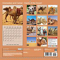 Dromedary and Camel - Giants of the Desert (Wall Calendar 2019 300 × 300 mm Square) - Produktdetailbild 13