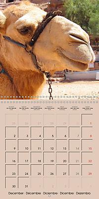 Dromedary and Camel - Giants of the Desert (Wall Calendar 2019 300 × 300 mm Square) - Produktdetailbild 12