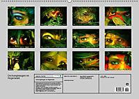 Dschungelaugen im Regenwald (Wandkalender 2019 DIN A2 quer) - Produktdetailbild 13