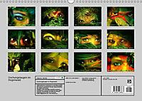 Dschungelaugen im Regenwald (Wandkalender 2019 DIN A3 quer) - Produktdetailbild 13