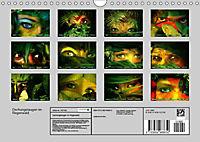 Dschungelaugen im Regenwald (Wandkalender 2019 DIN A4 quer) - Produktdetailbild 13