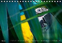 Dschungelleben - Tierportraits (Tischkalender 2019 DIN A5 quer) - Produktdetailbild 5