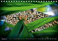 Dschungelleben - Tierportraits (Tischkalender 2019 DIN A5 quer) - Produktdetailbild 2