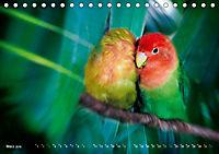 Dschungelleben - Tierportraits (Tischkalender 2019 DIN A5 quer) - Produktdetailbild 3